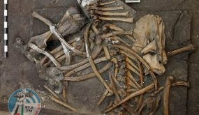 ألمانيا.. العثور على هيكل عظمي لفيل عمره 300 ألف سنة (فيديو)