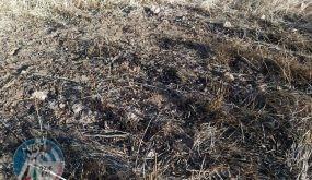 مستوطنون يحرقون 30 دونما من المحاصيل الزراعية بالقرب من مسافر يطا