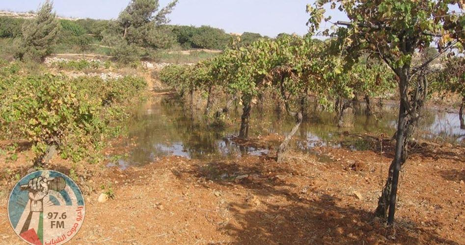 مستوطنون يغرقون أراضي المواطنين شمال نابلس بالمياه العادمة